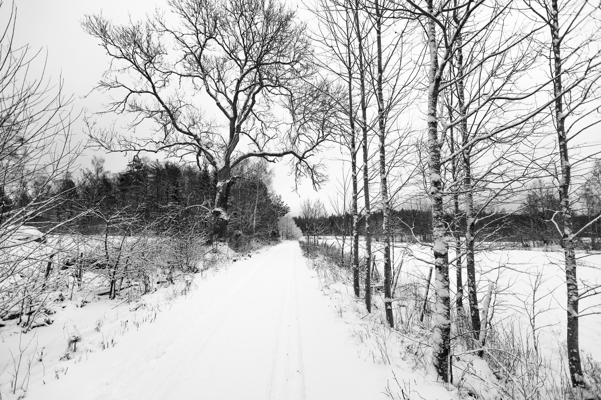 Vinter i Skäfshult